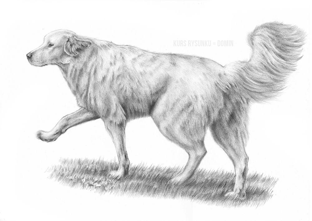 jak narysować psa git