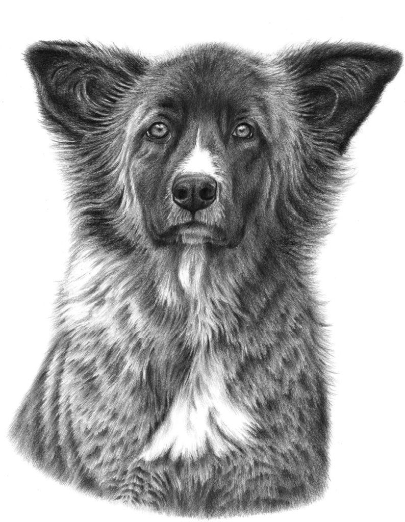 jak narysować psa ołówkiem