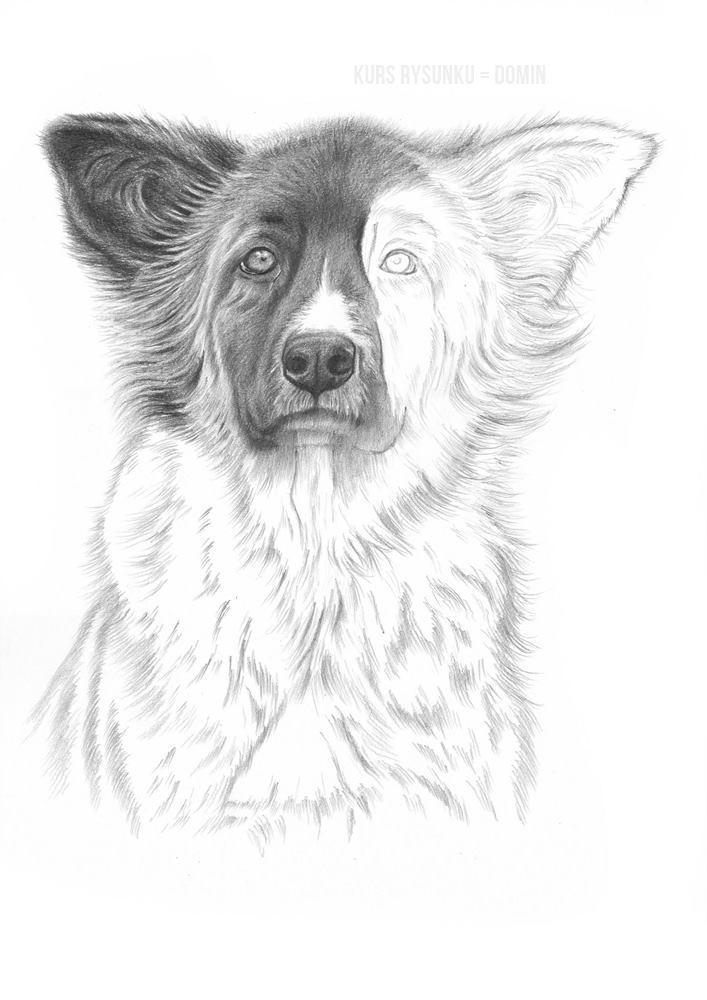 jak rysować zwierzęta lekcja