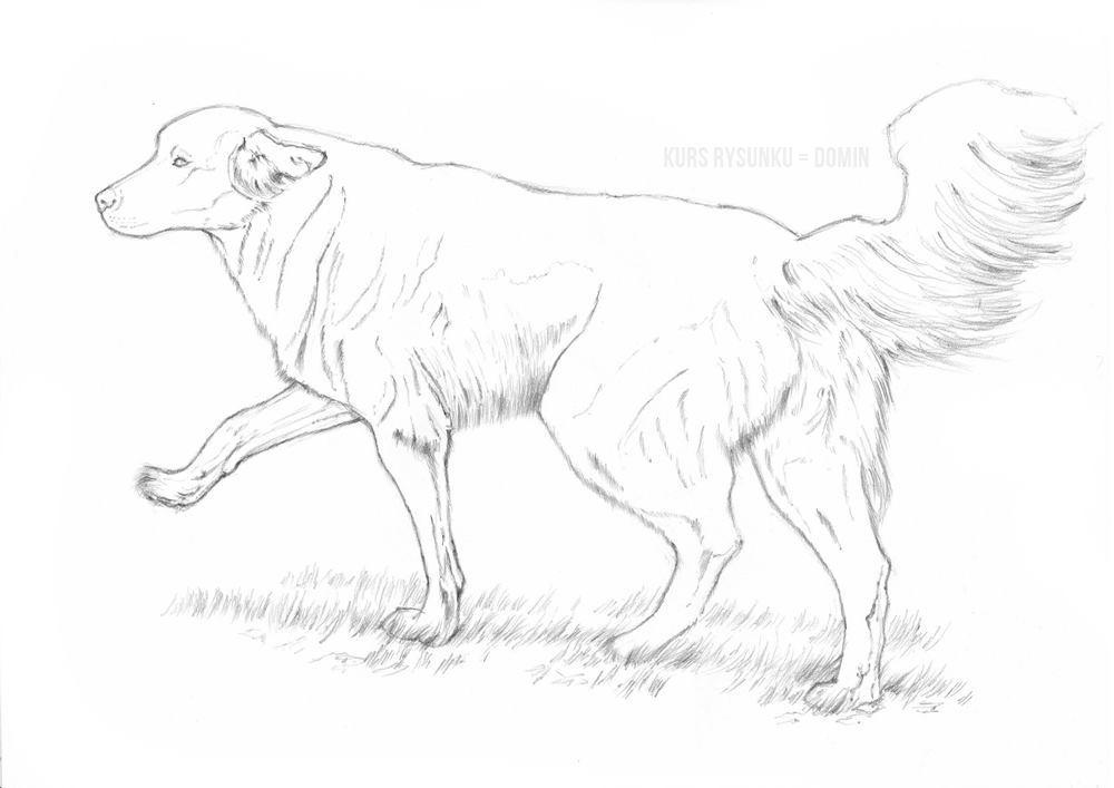 jak rysować zwierzęta pieska