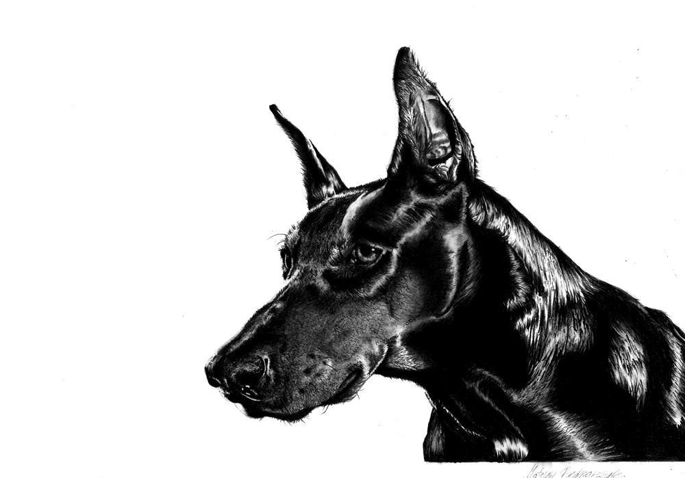 rysunek ołówkiem psa