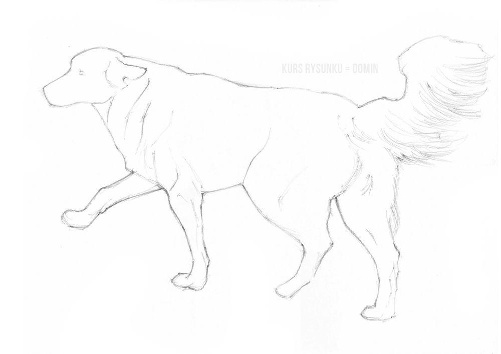 szkic ołówkiem psa a