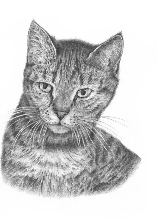 jak narysować kota przodem
