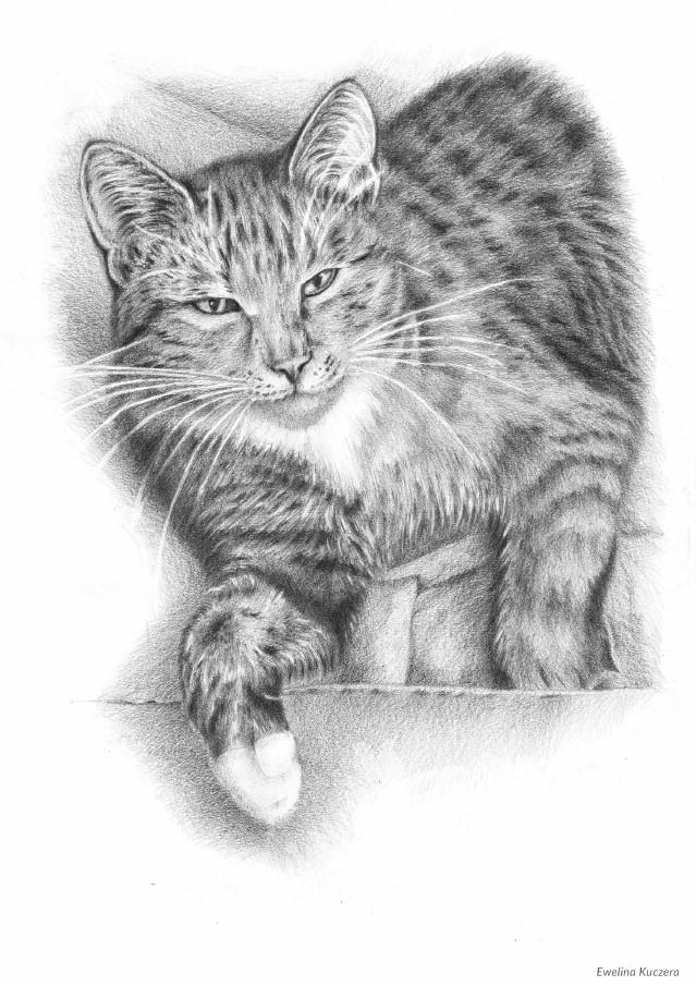 jak narysować kota w ruchu