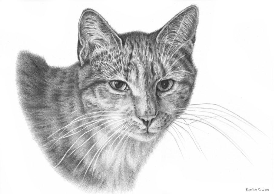 jak narysować kota ołówkiem