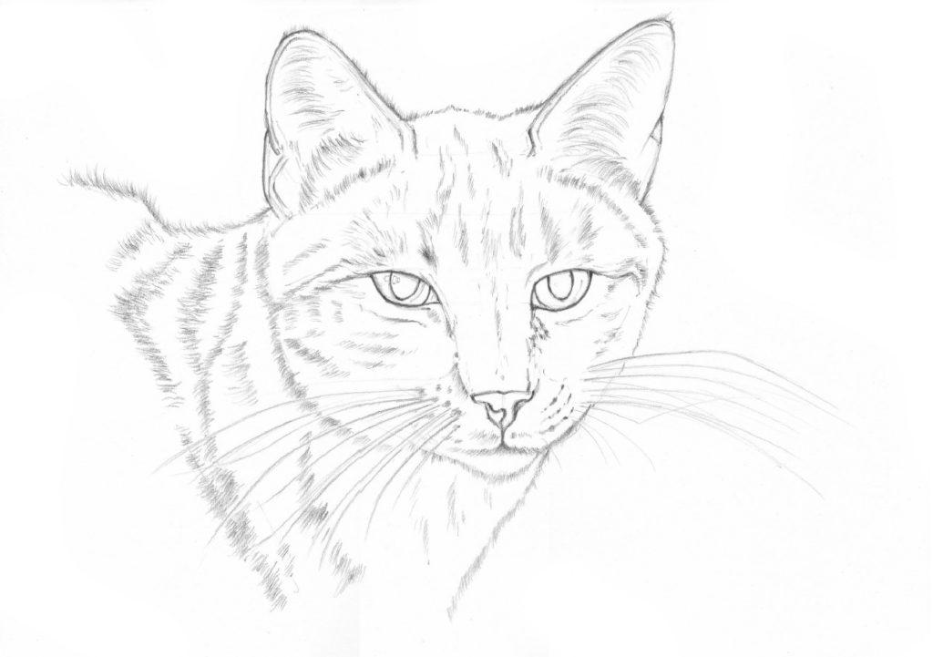 jak narysować kotkę