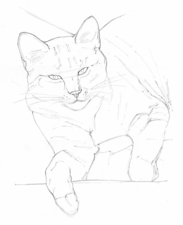 jak narysować łapę kota