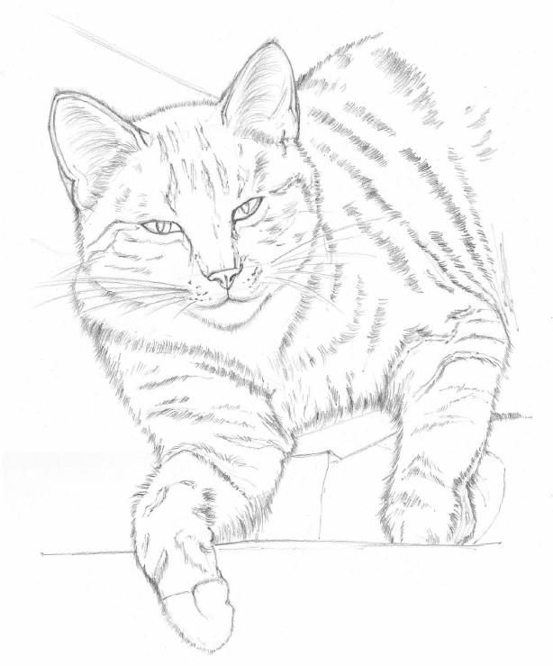 jak nauczyć się rysować koty