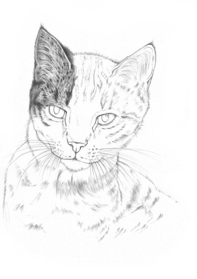 jak narysować kota dla dziecka