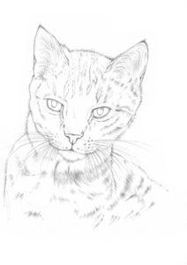 jak narysować kota od podstaw