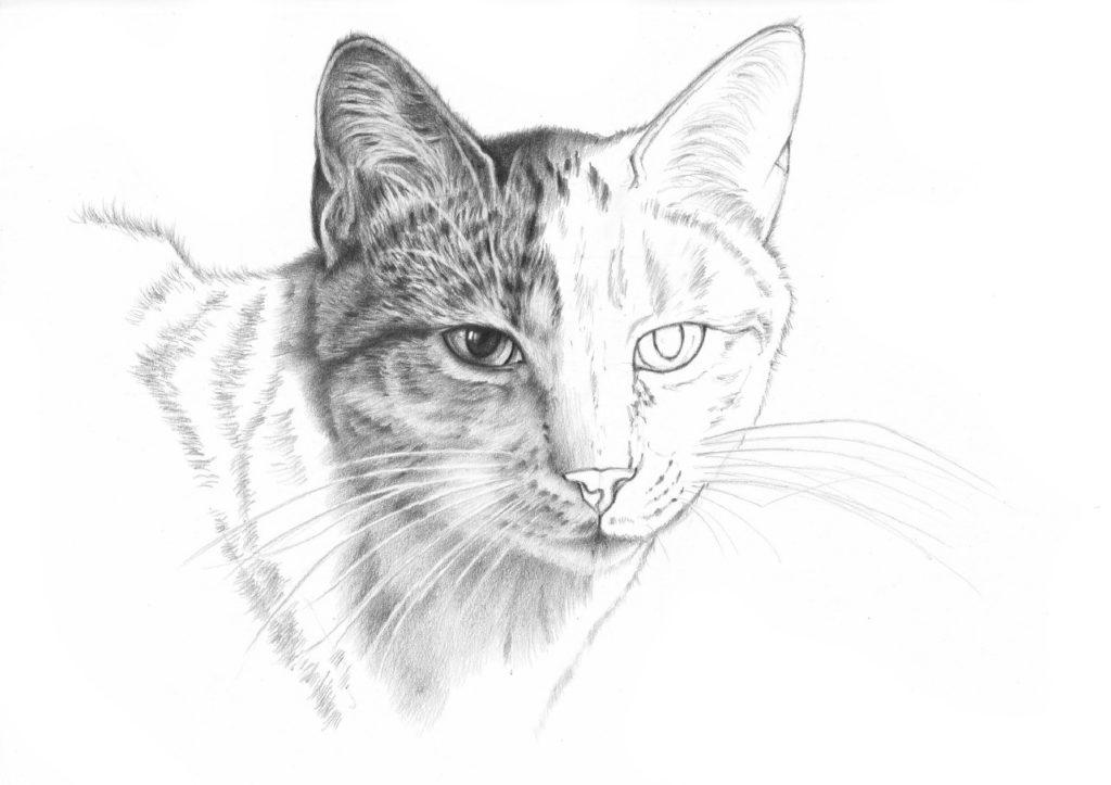 lekcja rysowania kota
