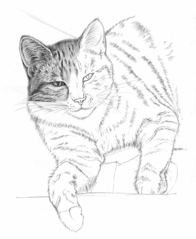 rysunek kota dla dzieci